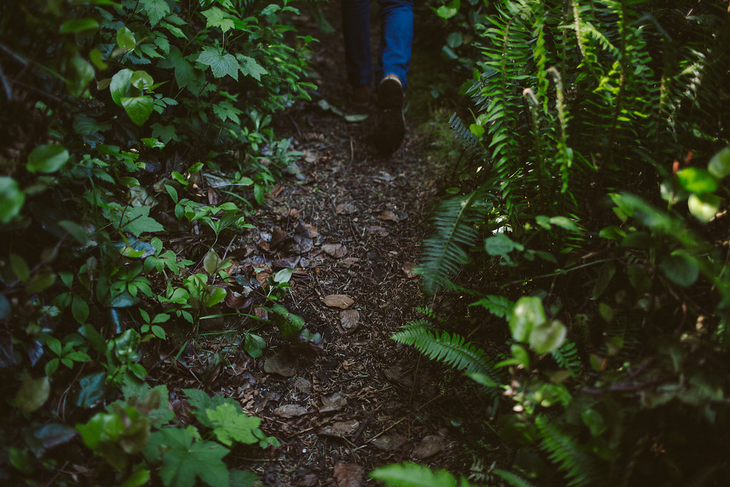 Hiking Path in Russ Park | Ferndale, CA