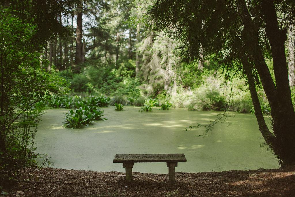 Zipporah's Pond | Russ Park - Ferndale CA