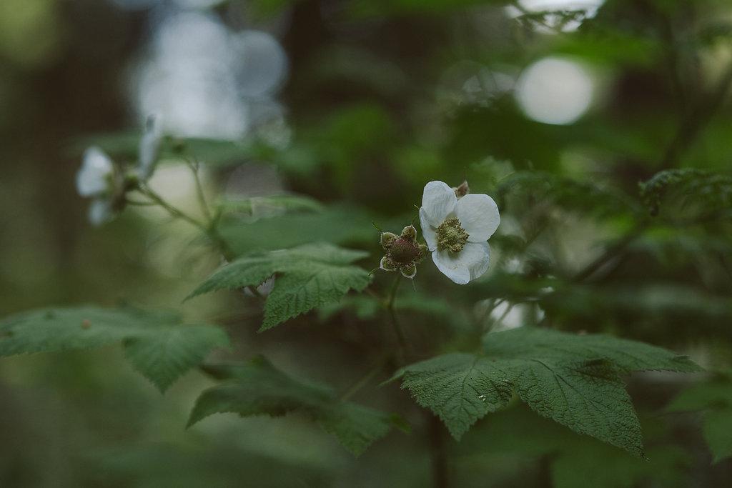 Berries in Russ Park | Ferndale CA
