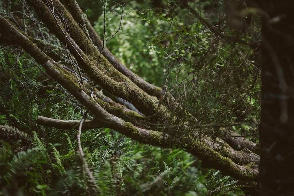 Trees in Russ Park | Ferndale CA