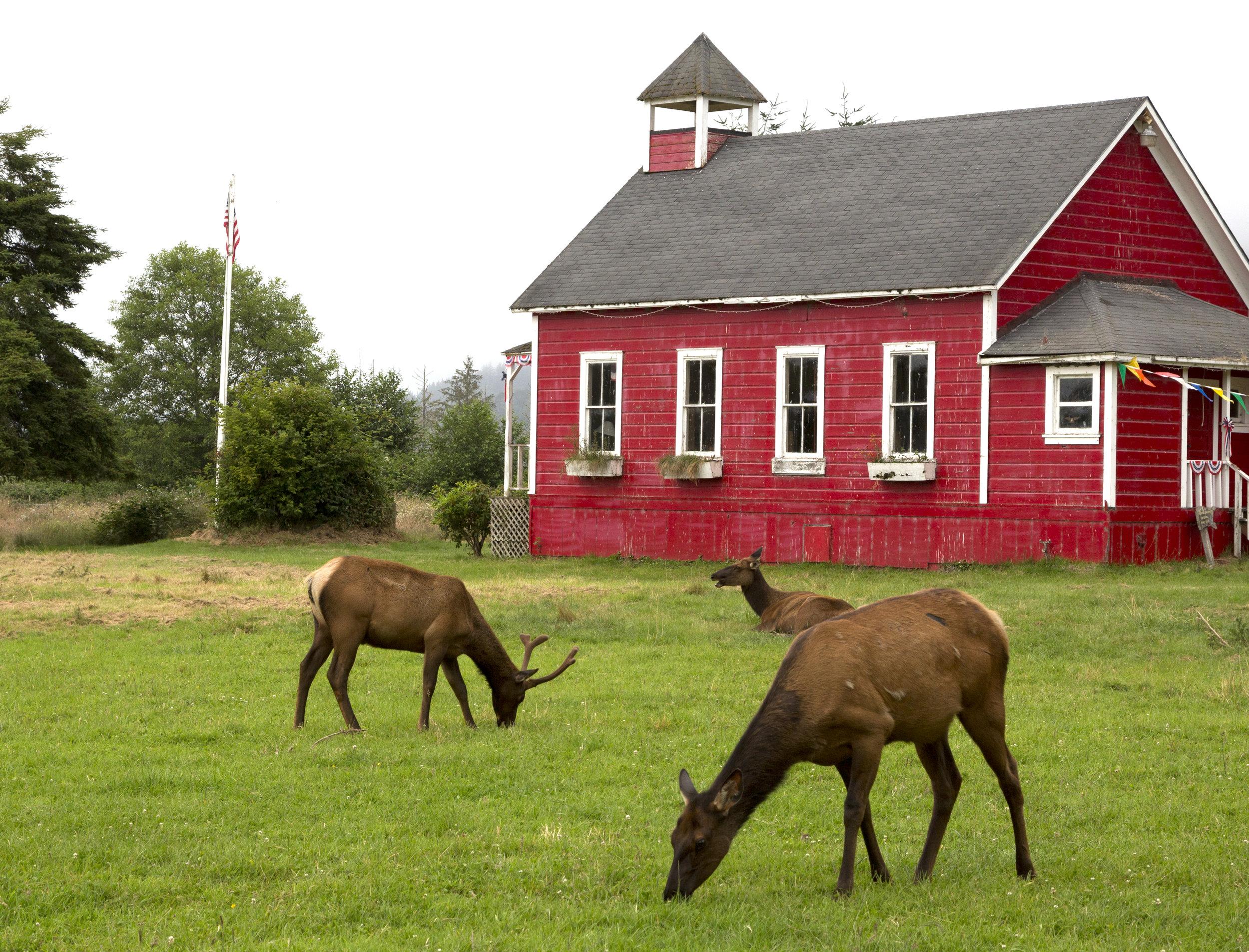 Elk in Orick.jpg