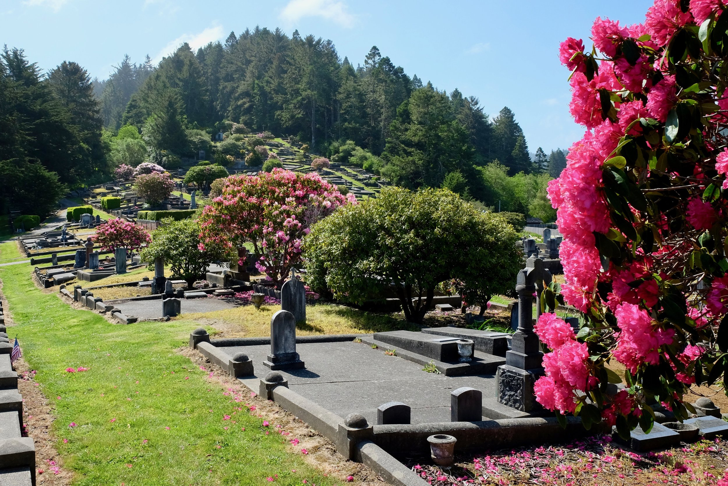 Ferndale Cemetery Rhododendrons in May.jpg