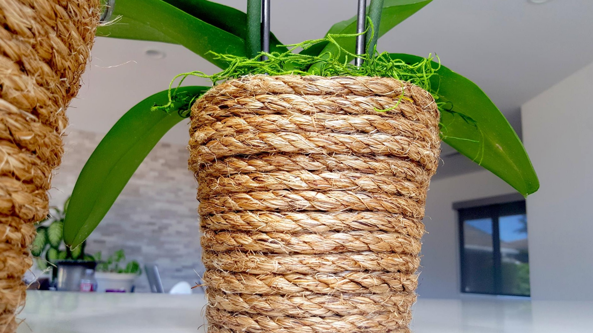 coiled planter