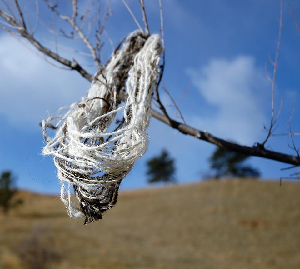 Freshly washed skein drying in the wind. Photo A. Chmielewski