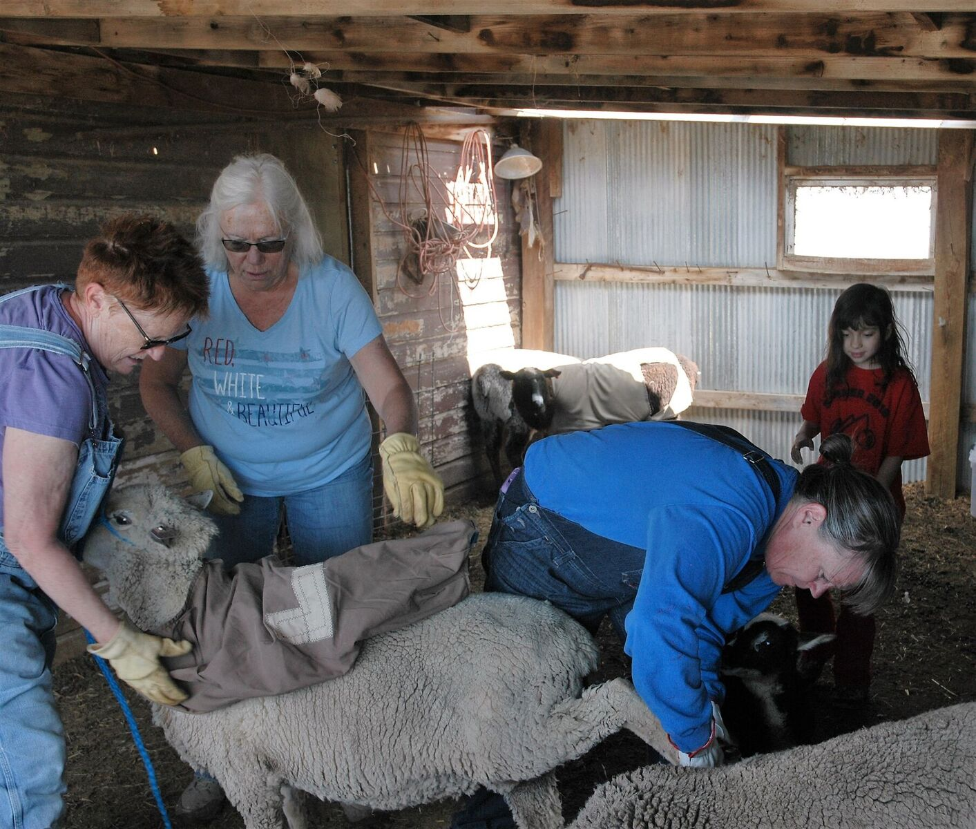 Julie Bishop, Flo Olsen, Sarah Hagemeister and Margaret Lujan working in the shed.