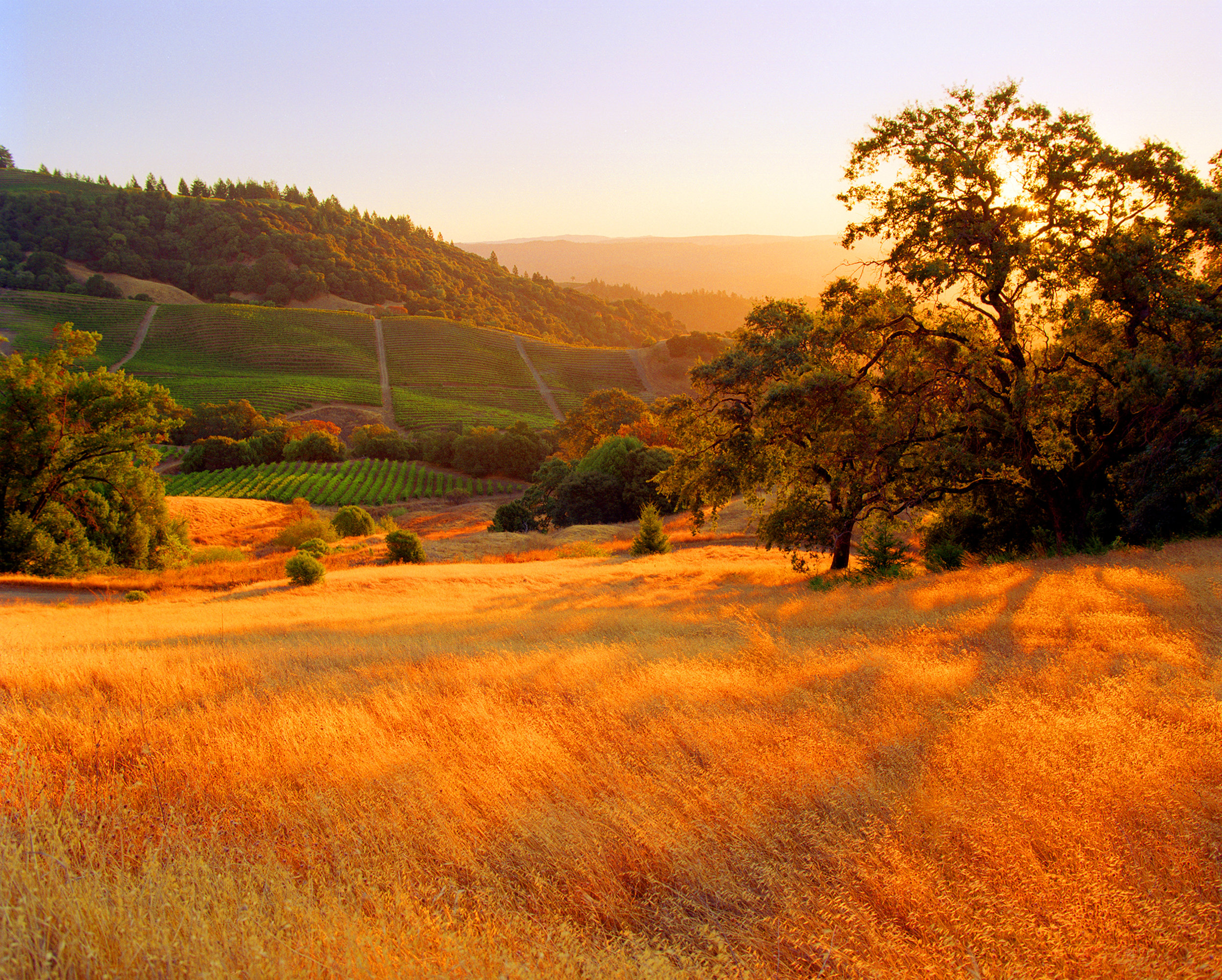Sonoma County, my home.