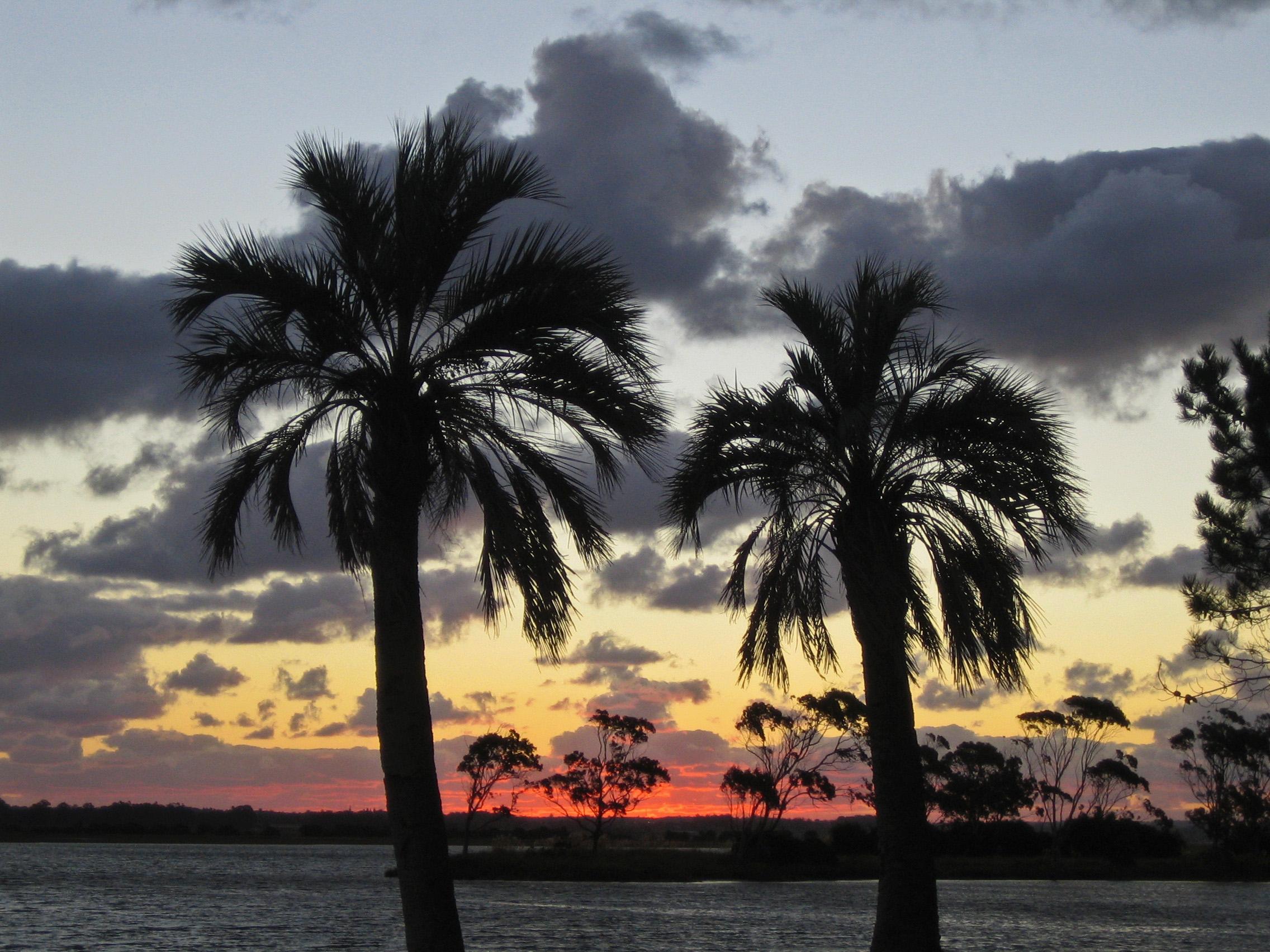 Image credit:  Palm Tree  by Historias de Cronopios, CC BY-NC-ND 2.0 via Flickr