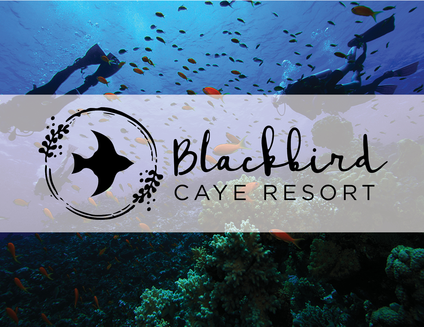 Blackbird Caye Resort - Destination Branding