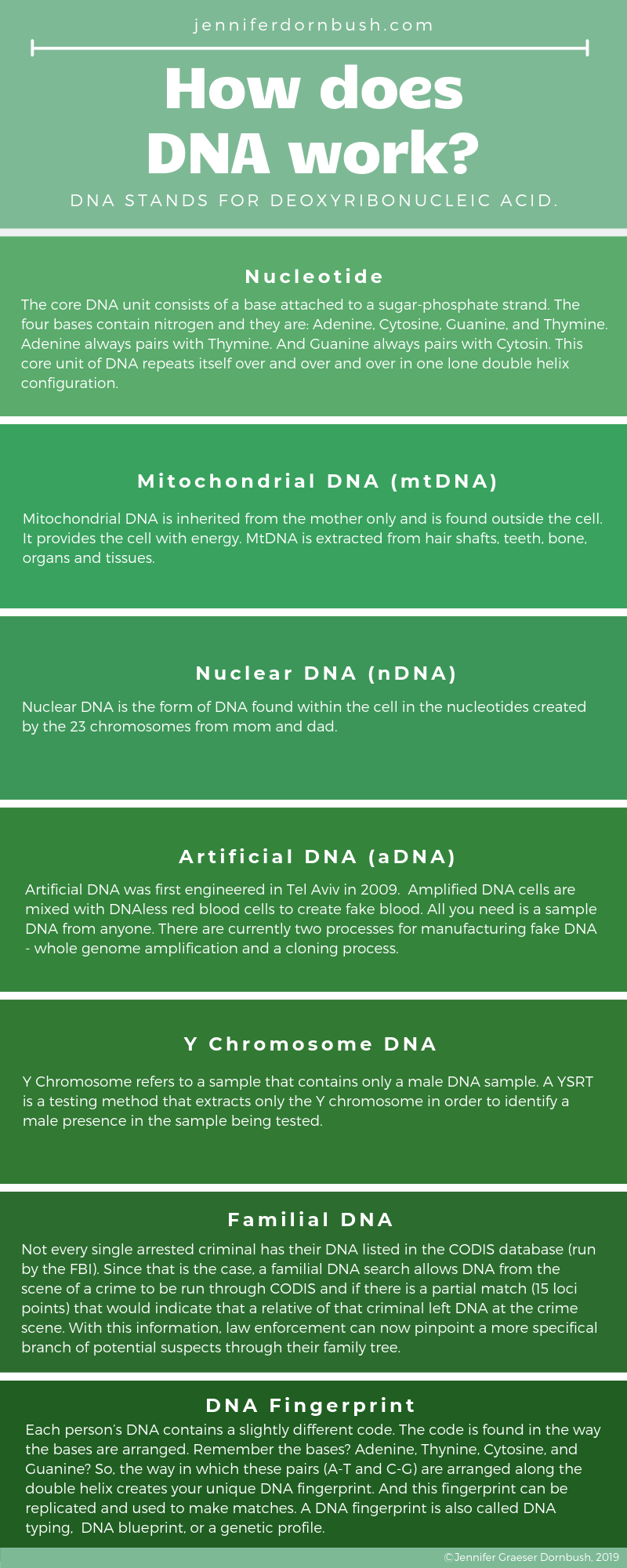 How does DNA work?-2.png