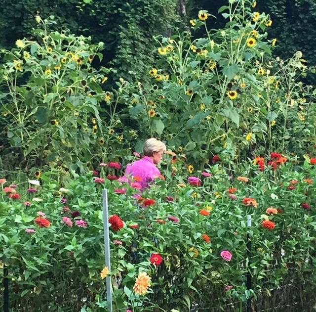 While searching for my own garden, I fed my color and flower fix by enrolling in a flower gathering workshop offered by the wonderful  Blooms in Hand , based in Verona, N.J. That's me, wandering among the dahlias and sunflowers at  Morgan's Farm  in Cedar Grove, N.J. (Photo: Blooms in Hand).
