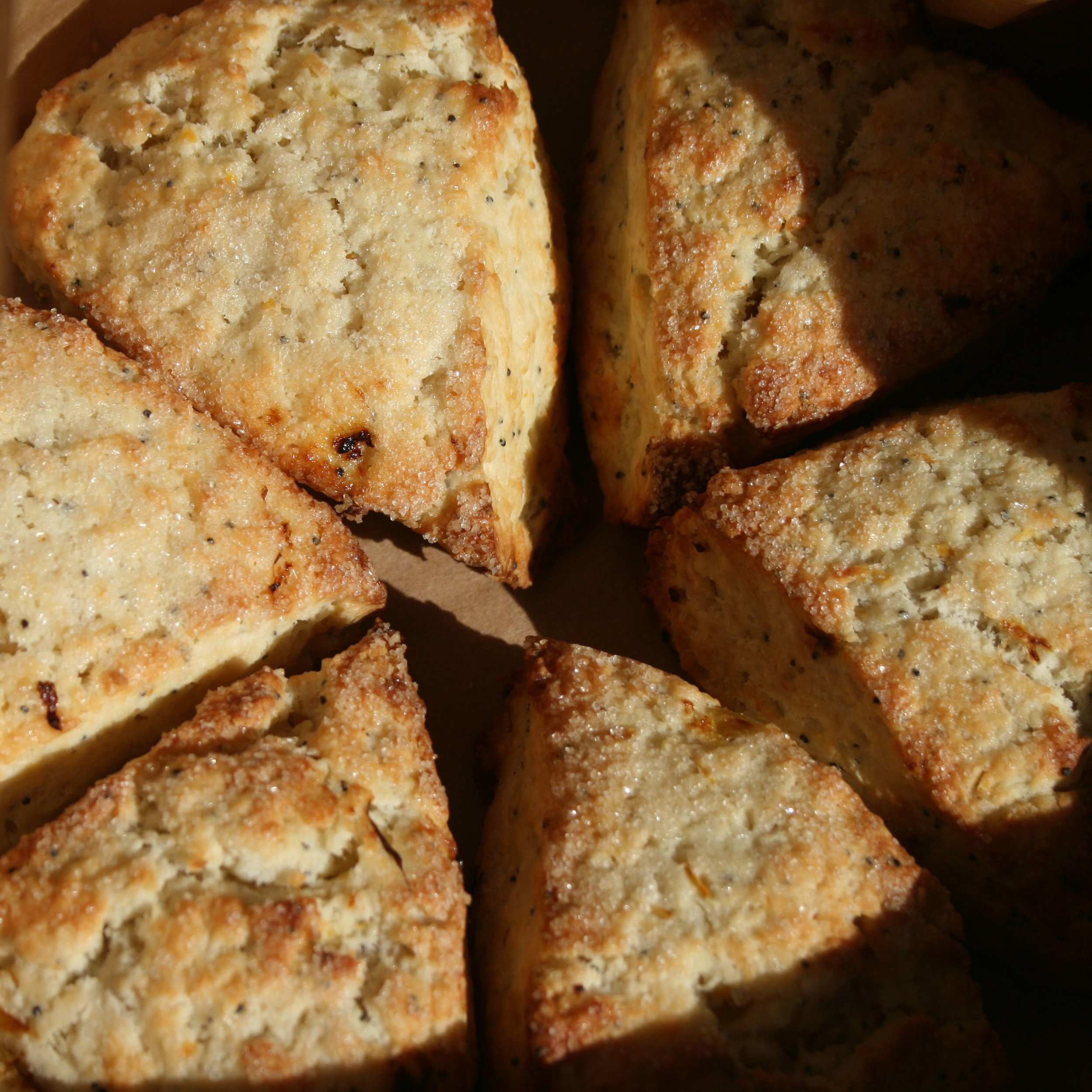 Scone of the Week: MAPLE PECAN - Summer is almost here which means it is time to say goodbye to Maple Pecan for a while. Enjoy one last hurrah with these delightfully nutty scones. We candy pecans in organic maple syrup and mix them in with our classic cream scones along with an extra swirl of maple for good luck. Enjoy them while you can!Add to your subscription: 3 for $7.50 or 6 for $15