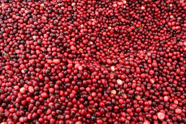 Cranberry 2.jpg