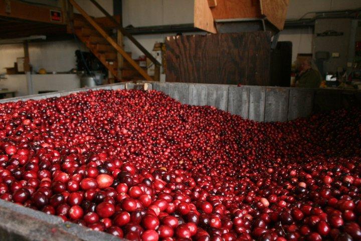 Cranberry bin.jpg
