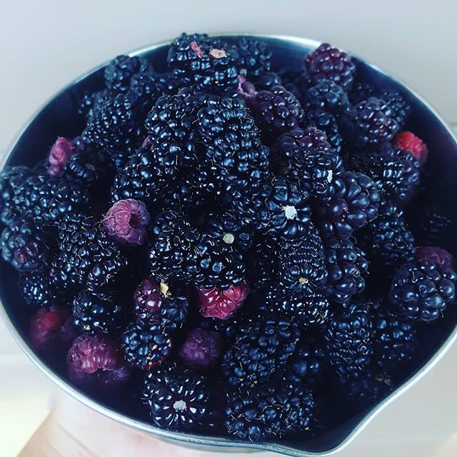 Friendly reminder: we are on summer break! (That can be an adult thing, right?) Don't worry, we are keeping busying busting ass on construction projects and eating all these berries. 💪🔨👨‍🔧👩🏽‍🔧🏘🛠 #bakeshopca #berryseason #summerbreak