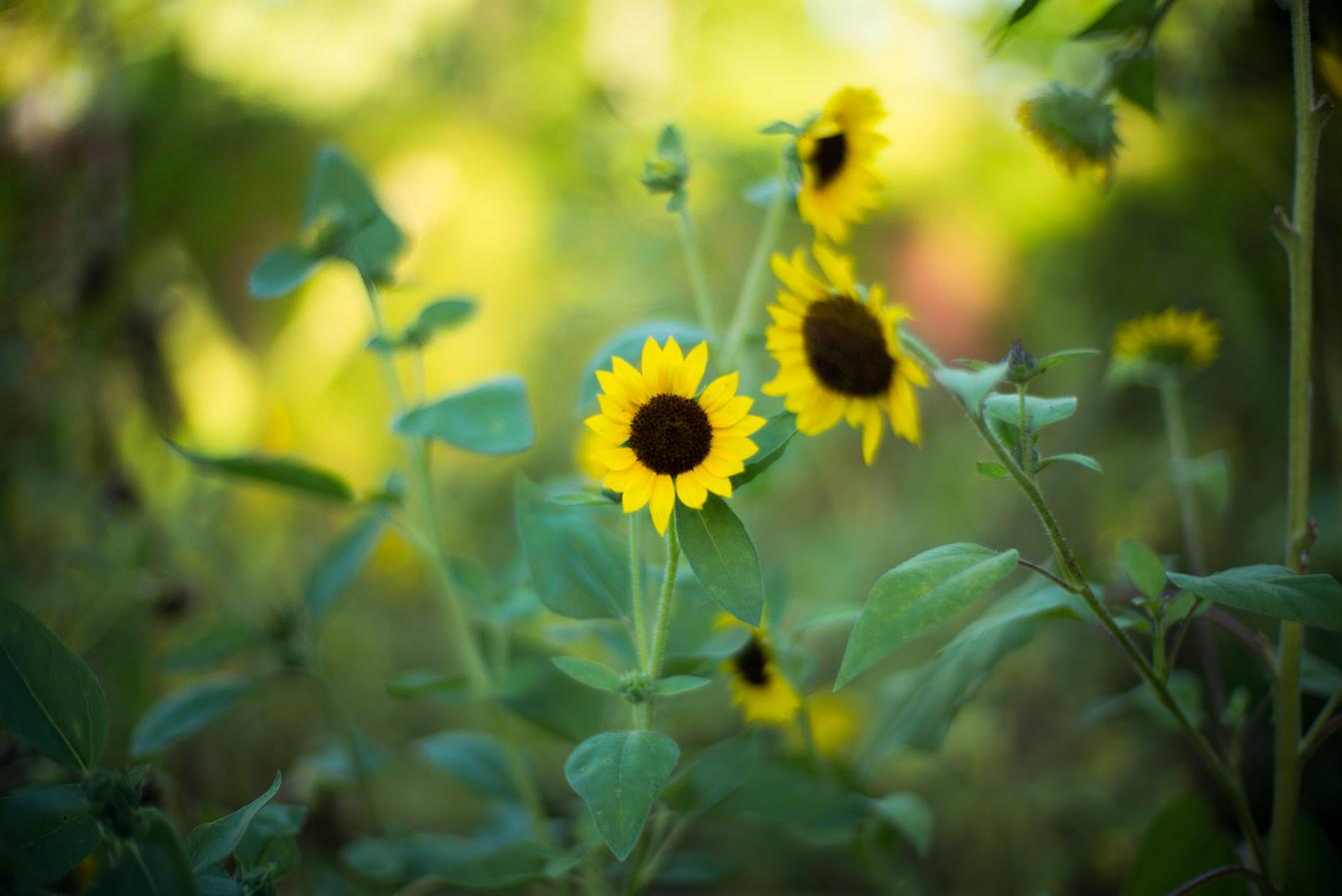 flores_jardin2.jpg