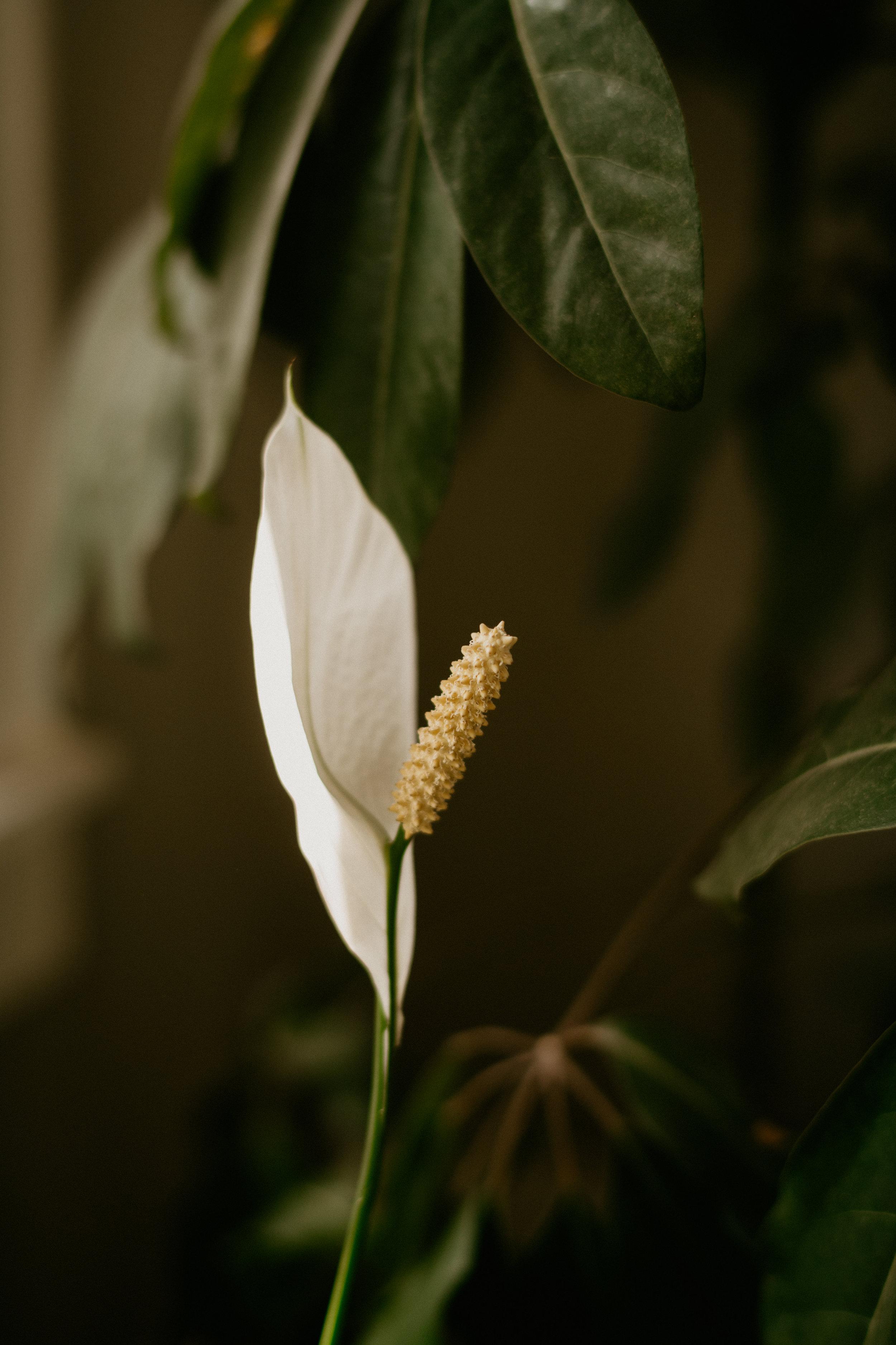 houseplants-care-3010.jpg