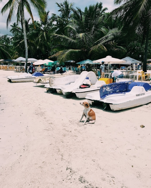 A doggy on Boca Chica beach