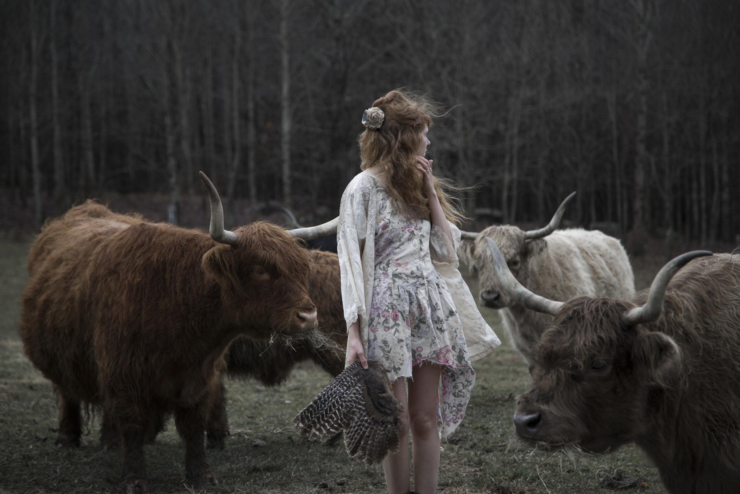 buzzard with cows.jpg
