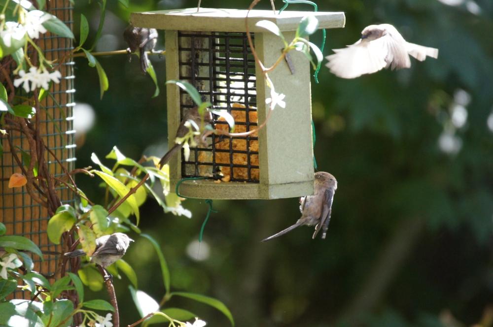 Jasmine and little birds_.jpg
