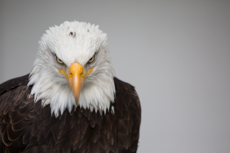 Keeping my eagle eye out for you!