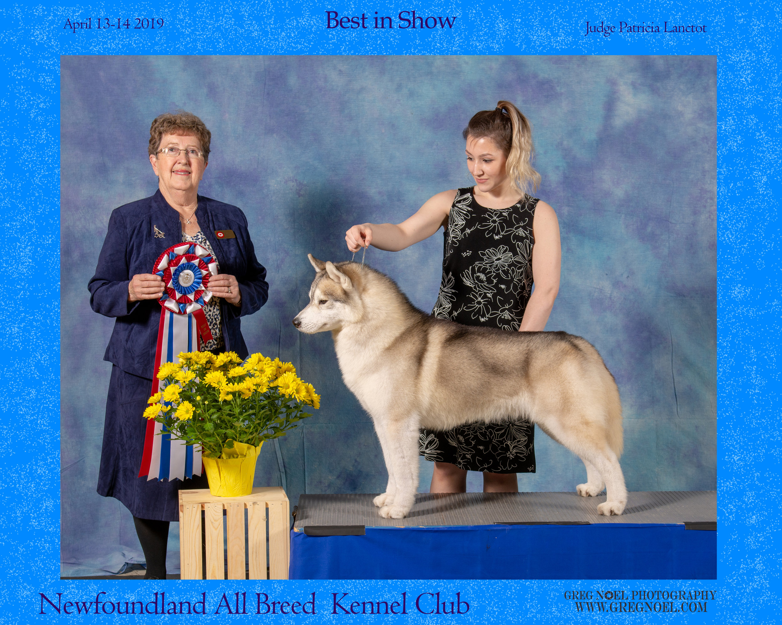 Newfoundland All Breed Kennel Club Dog ShowApril 2019 Booth Photos - Personal use digital downloads $40 each or free with valid coupon codeCommercial Licence for breeders/businesses/advertising $60 per imagePrints also available