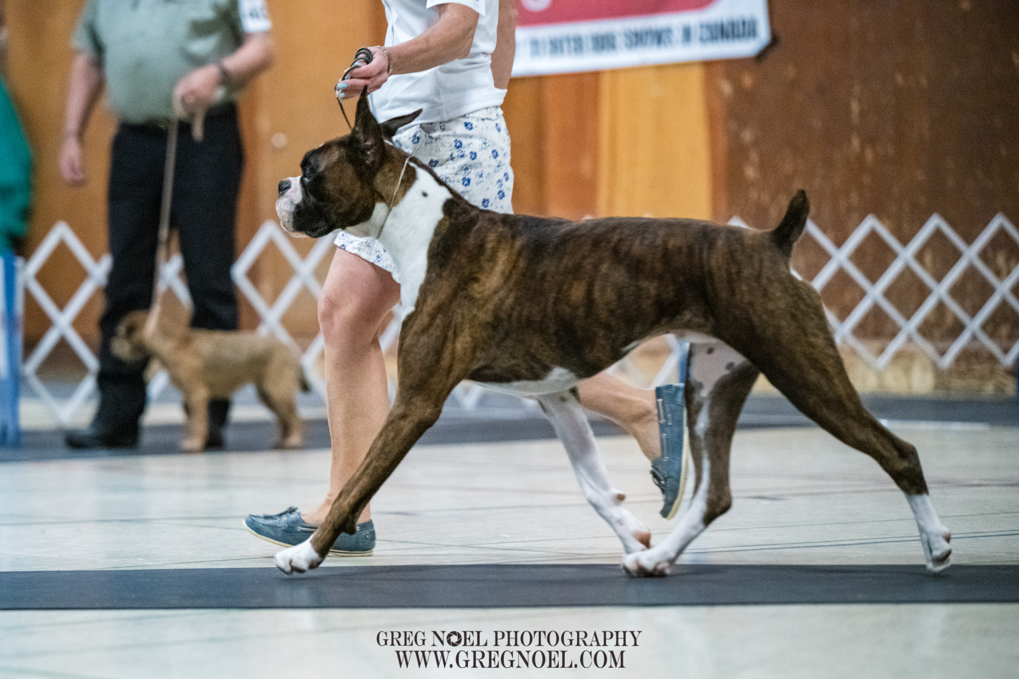 Newfoundland All Breed Kennel Club Dog ShowJuly 2019 Candids and Ring Photos - Personal use digital downloads$10 each, 3 for $25Commercial Licence for breeders/businesses/advertising additional $60 per imagePrints also available