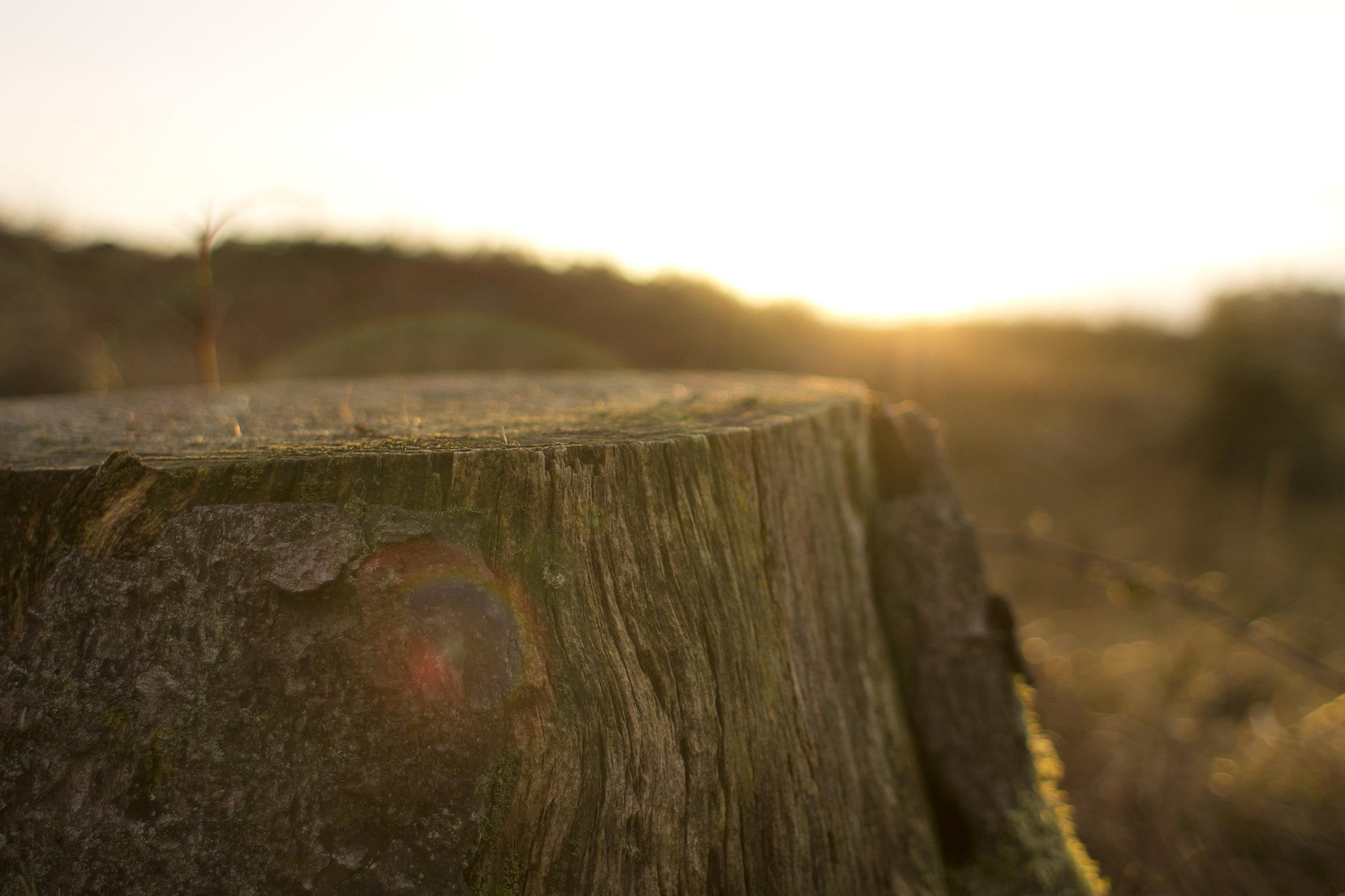 dawn-nature-sunset-dust.jpg