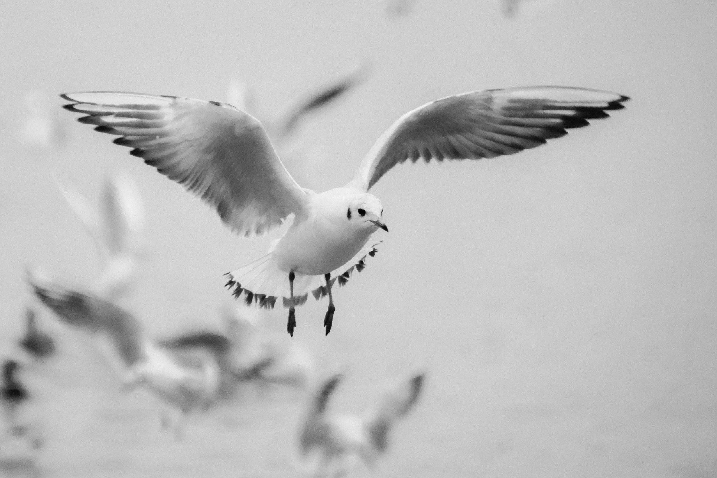 seagull-flight-bird-beach-60116.jpeg
