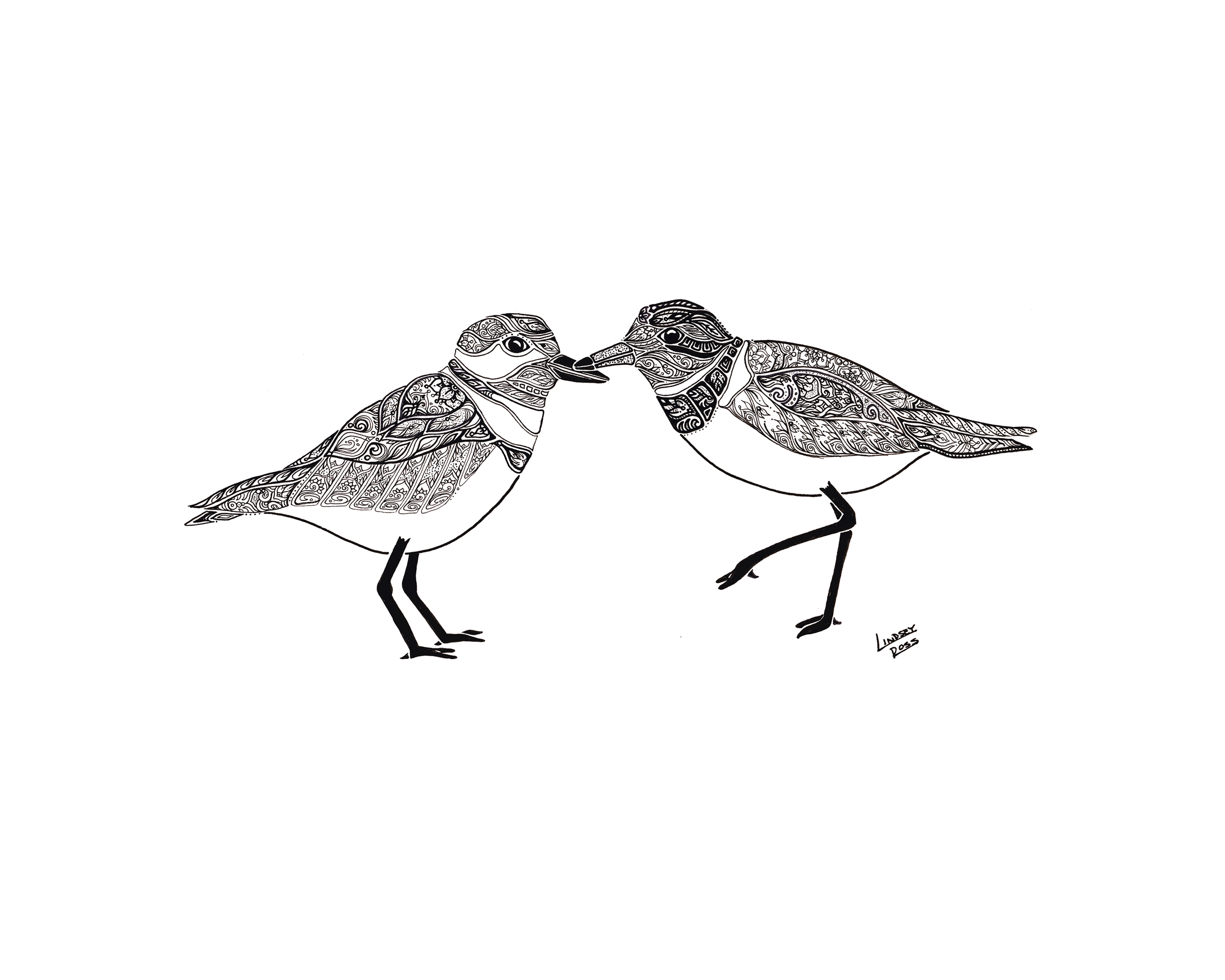 8 x 10 Plovers.png