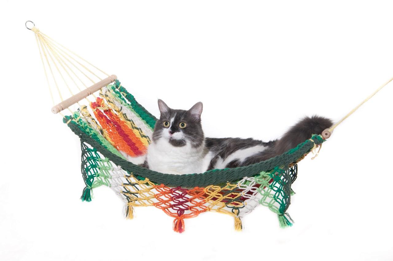 Kittenhammock.jpg
