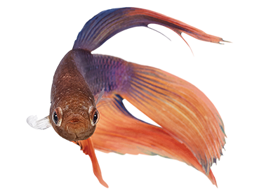 4) Fish -