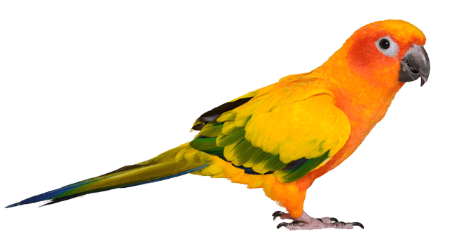 5) Bird -