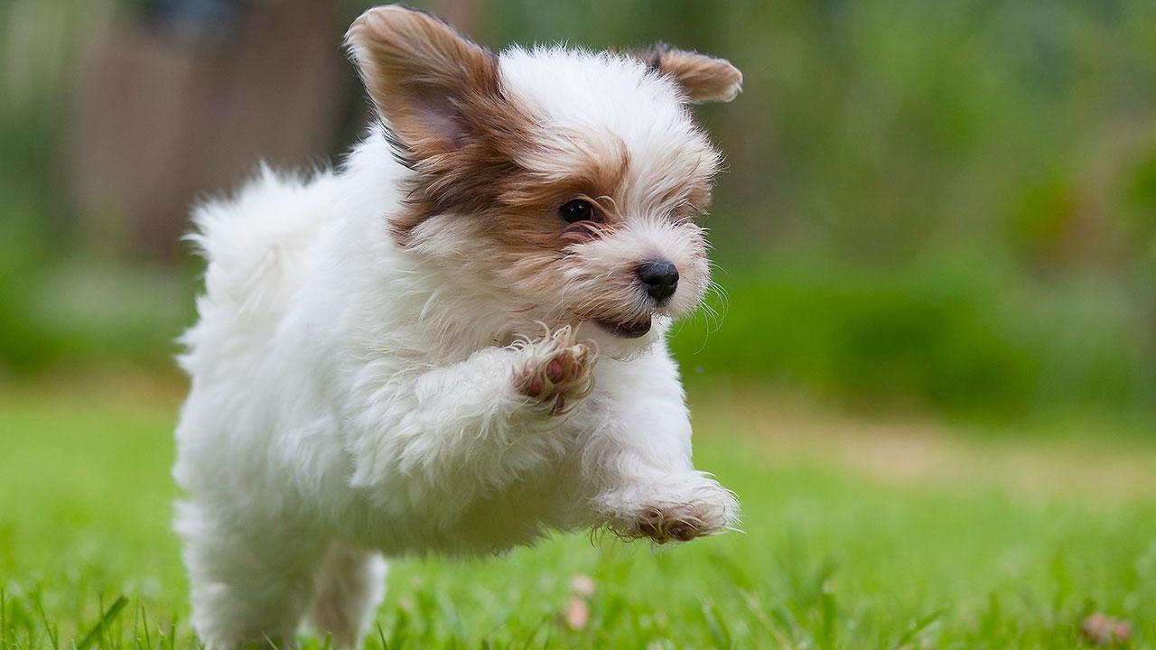 7) A Cute and Wonderful Dog -