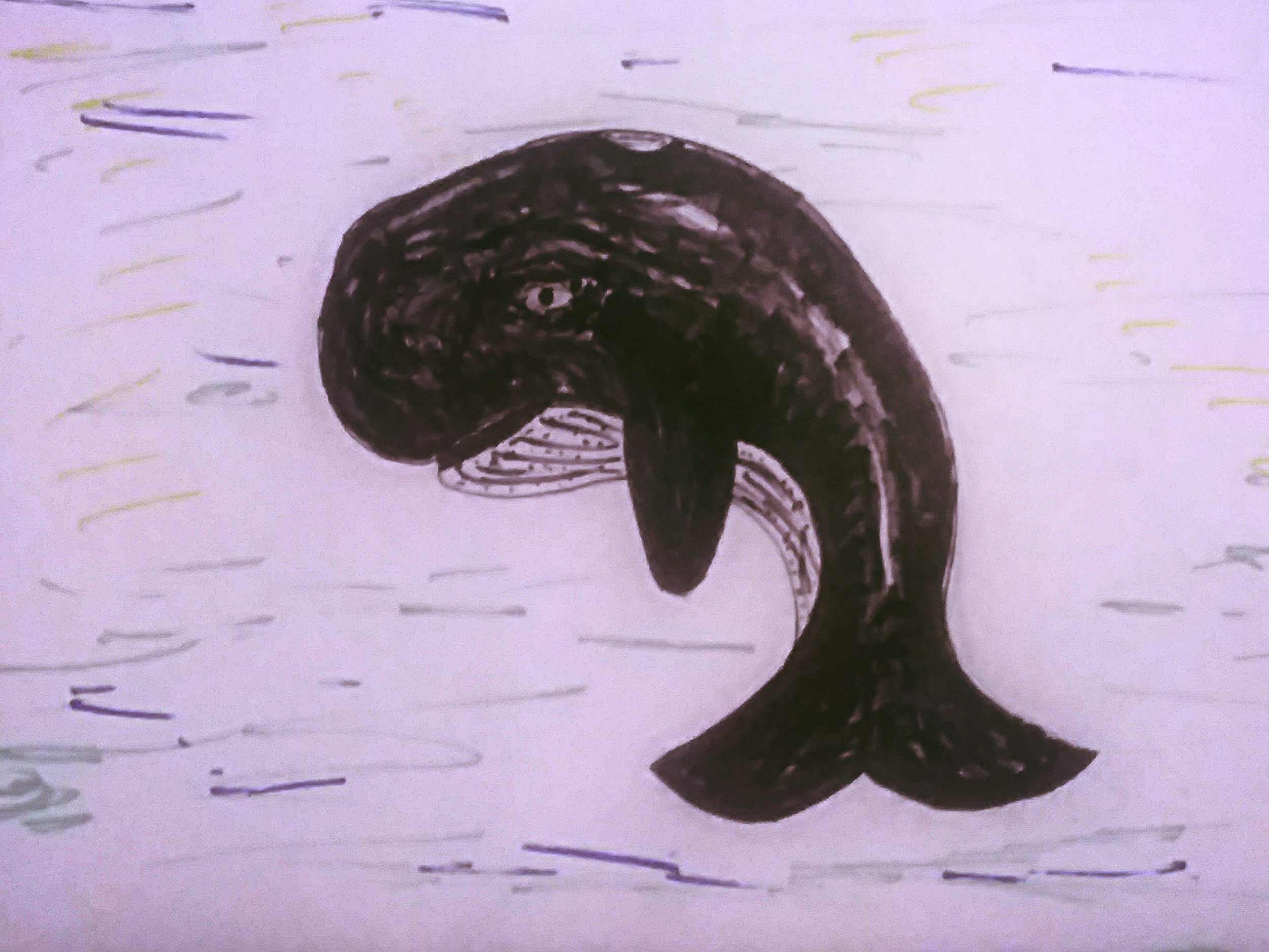 Whale - Day 12   Walter the whale is feeling blue
