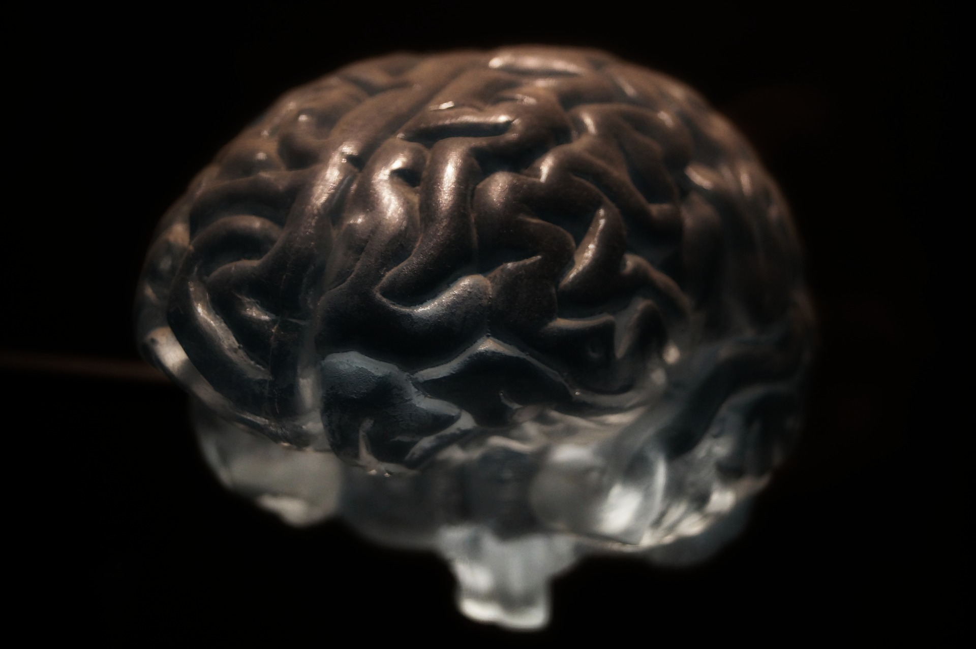 Neuro Blog -