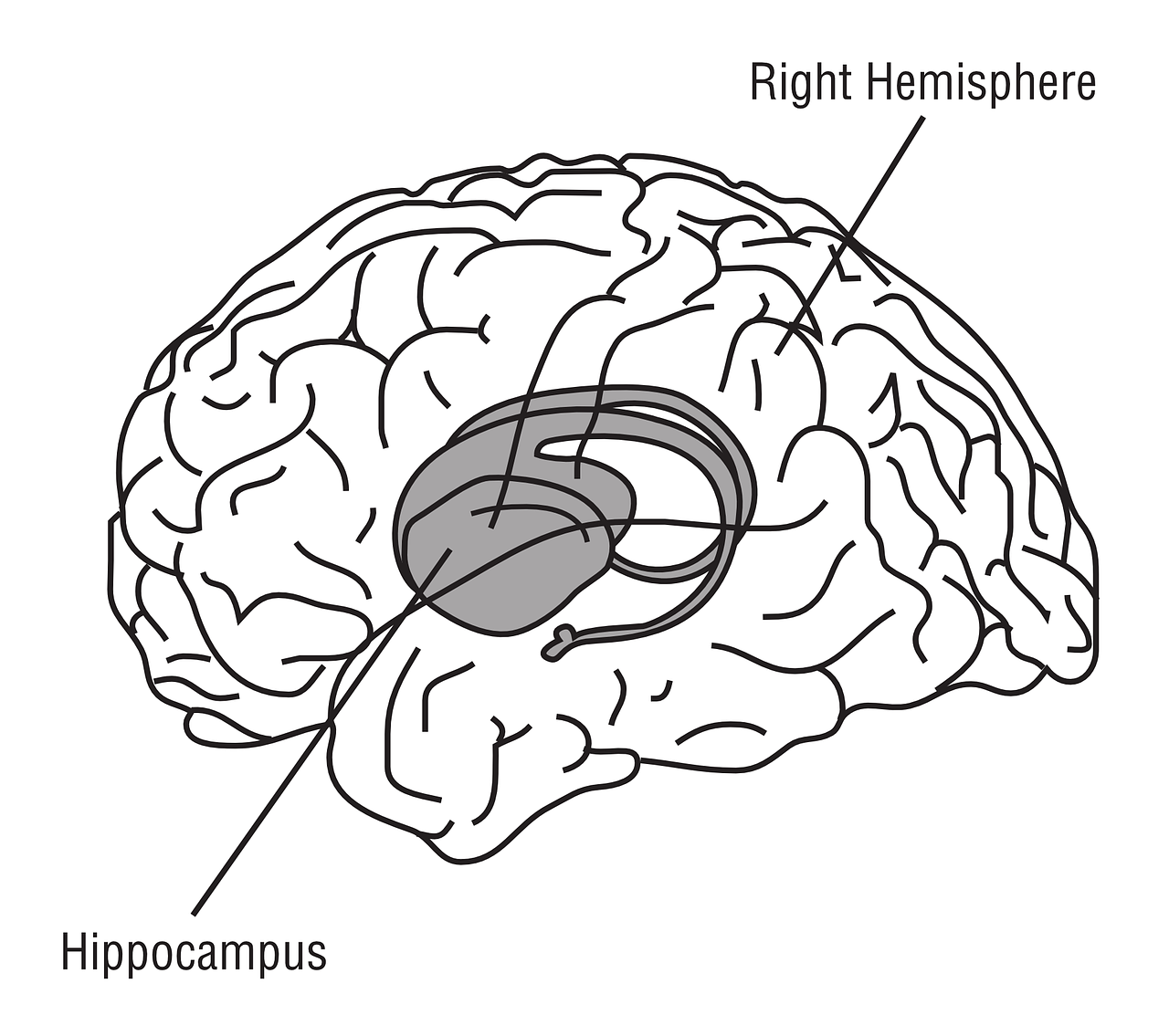 Phthalates impair neuroplasticity in the hippocampus, a region of the brain involved in memory and learning.