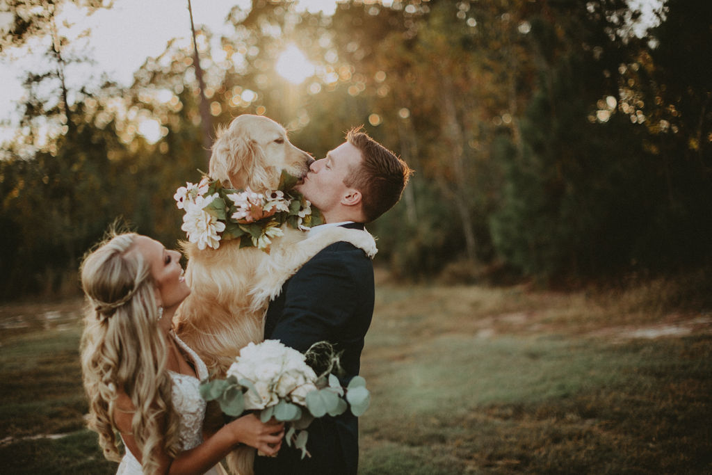 wedding photos with dog 2