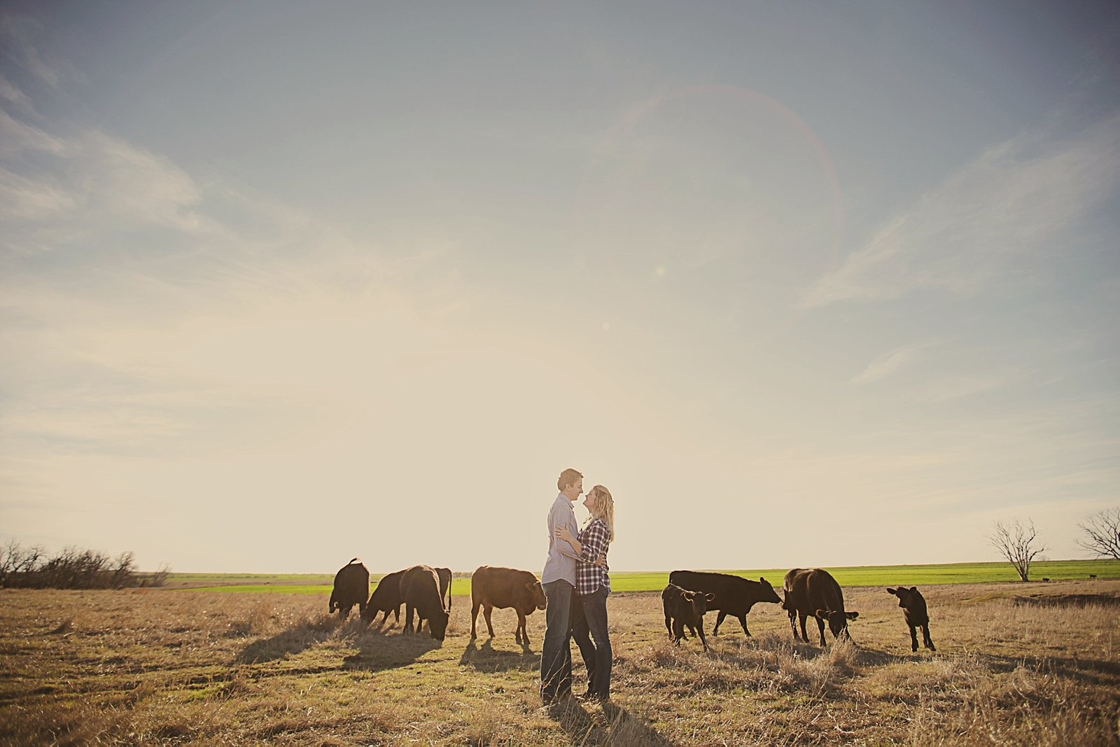 couple in a field, western oklahoma engagements, engagements on a farm, thomas oklahoma wedding photographer, weatherford oklahoma wedding photographer