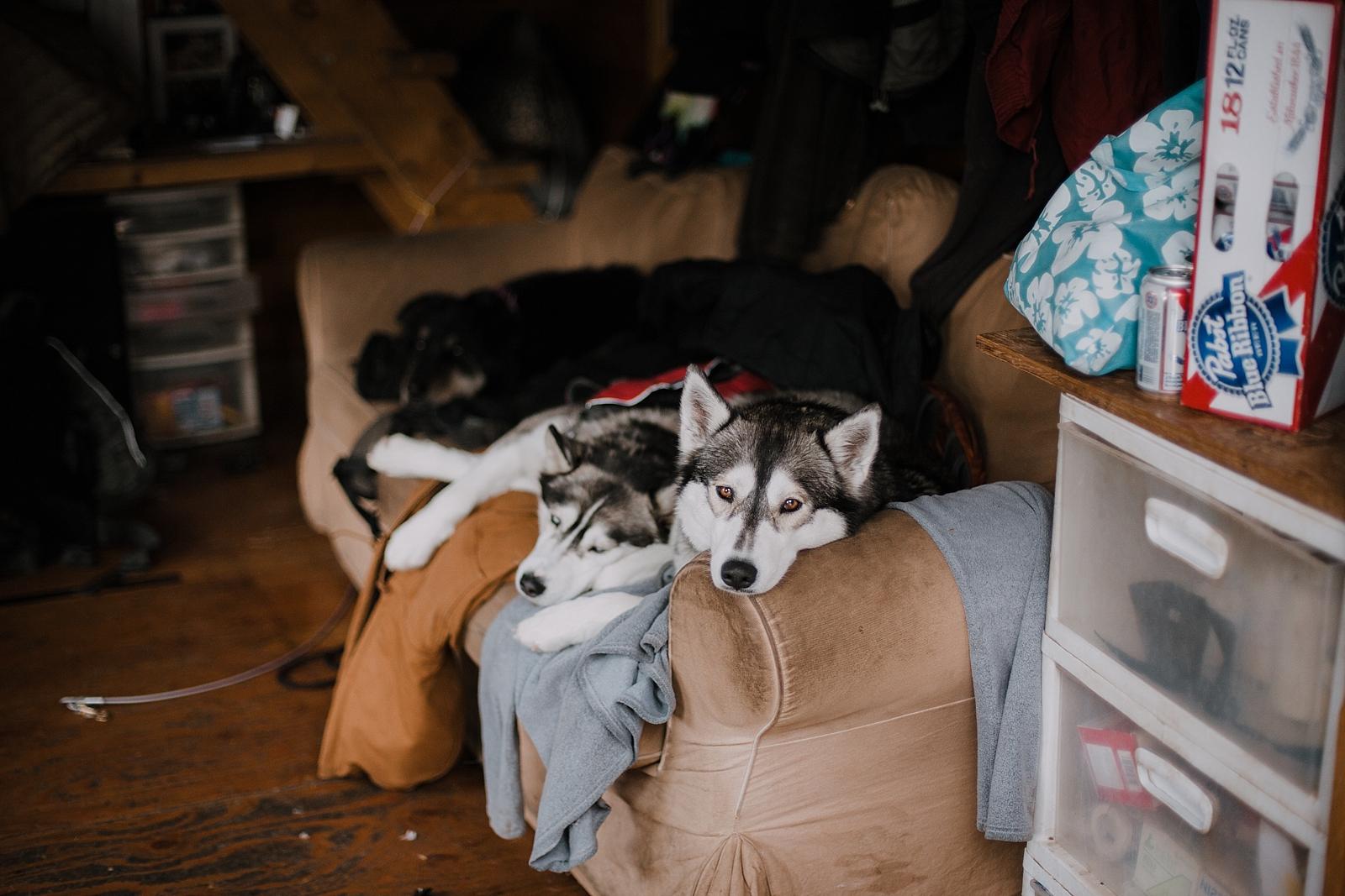 huskies sleeping, breckenridge colorado dogsledding, breckenridge colorado elopement photographer, breckenridge colorado wedding photographer, colorado dogsledding