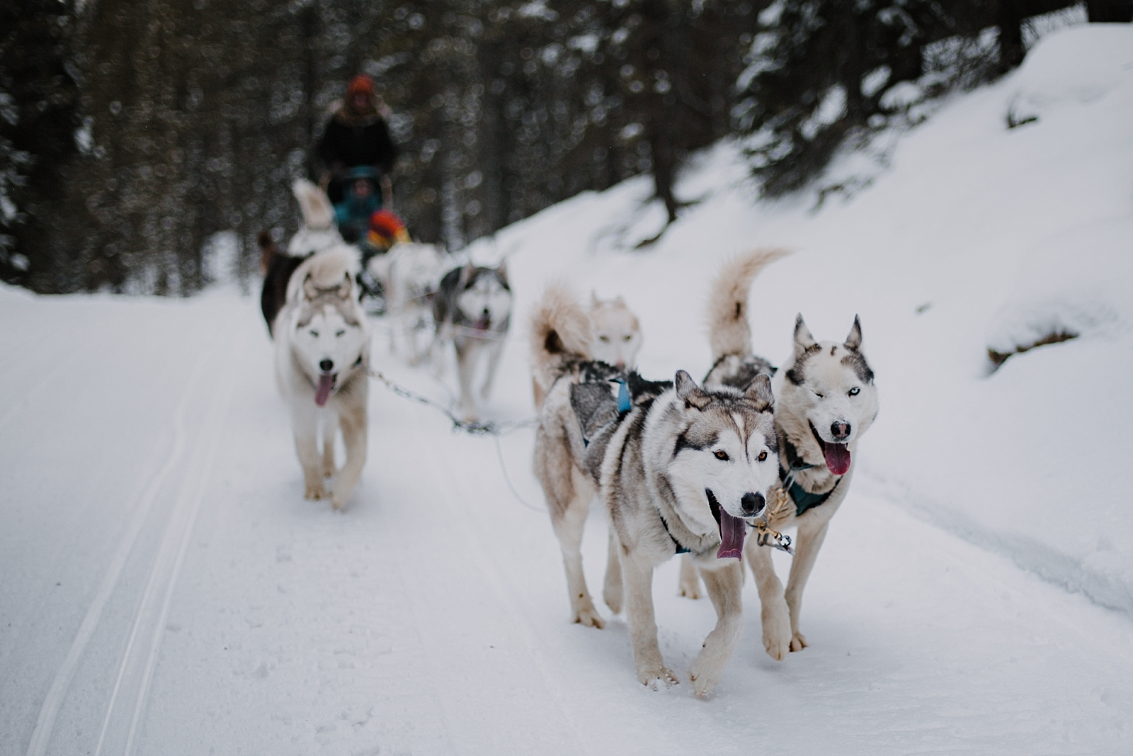 huskies smiling, breckenridge elopement photographer, breckenridge wedding photographer, leadville elopement photographer, leadville wedding photographer, sapphire point photographer