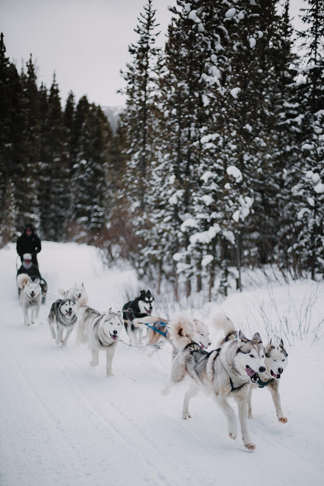 huskies running, breckenridge wedding photographer, breckenridge elopement photographer, leadville elopement photographer, leadville wedding photogapher, sapphire point photographer