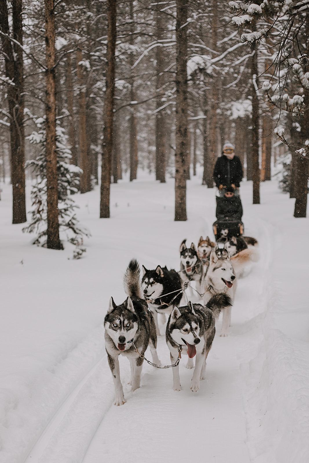 dogsledding engagement, sled dog, dogsledding, winter, winter elopement, winter wedding, breckenridge colorado photographer, colorado dog sledding, alaska, dogsledding elopement