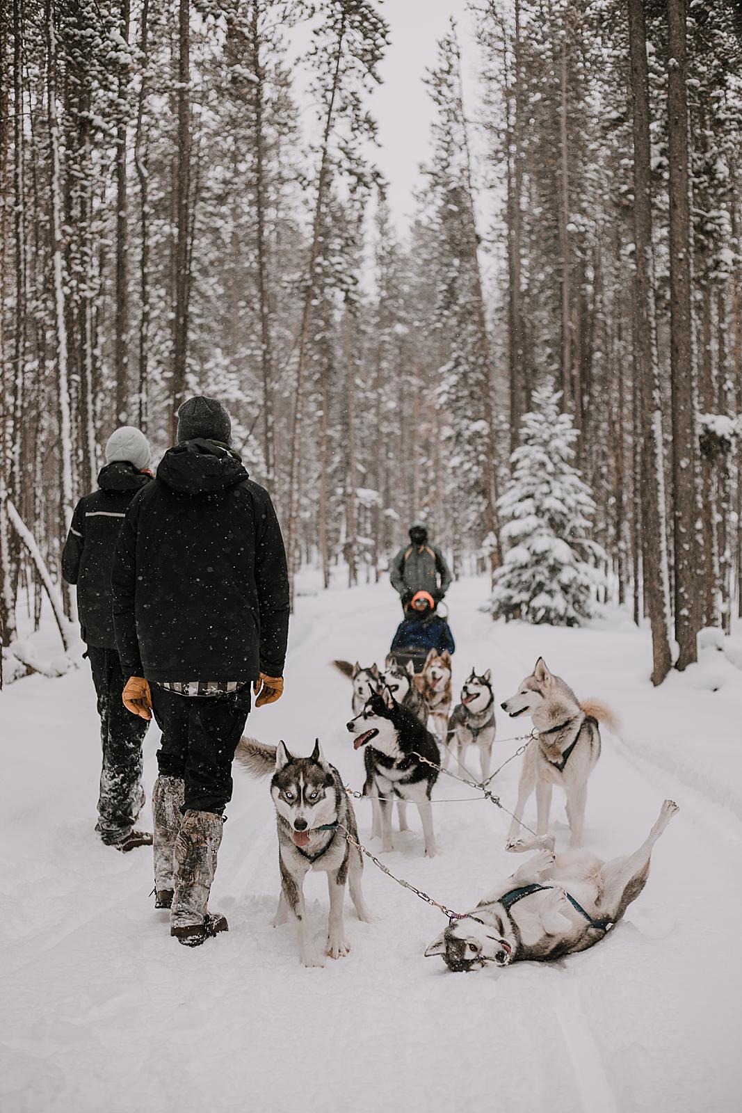 alaskan flat tire, sled dog, dogsledding, winter, winter elopement, winter wedding, breckenridge colorado photographer, colorado dog sledding, alaska  elopement, snowmobiling elopement
