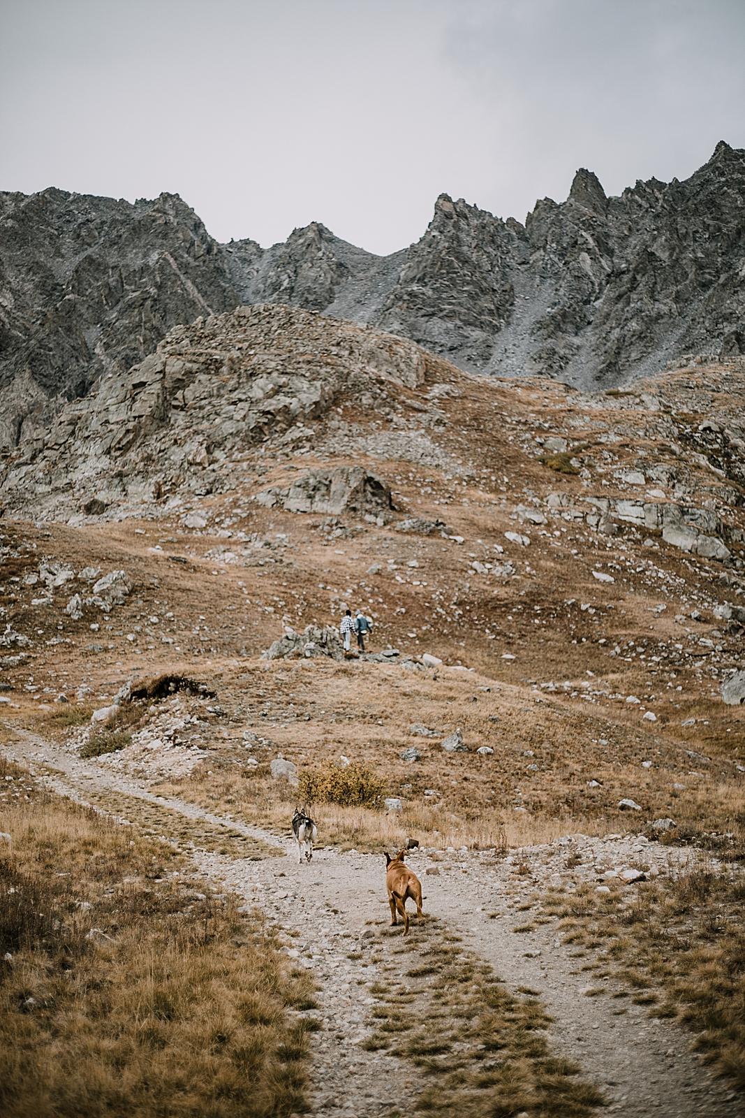 dogs running up mountain, colorado surprise proposal, hike mayflower gulch, mayflower gulch proposal, mayflower gulch elopement, mayflower gulch wedding, colorado mountainscape, leadville elopement