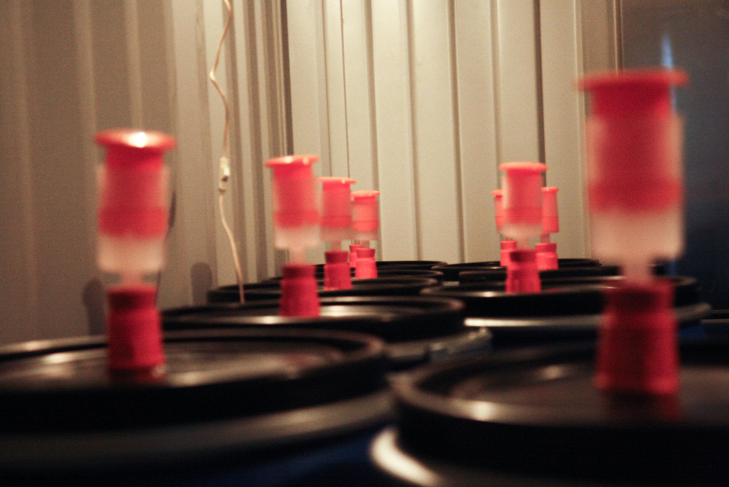 8 - Malolactic fermentation