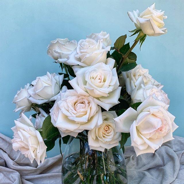 Sometimes simple is best  #rose #whiteroses #florist #shireflorist #white #simple