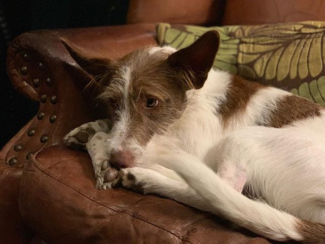 It's getting quite chilly outside. Luckily we've got cosy arm chairs, log fires, and award winning hot drinks - you might just have to share with the pub dog though. #sorrynotsorry #rescuedog #nofilter