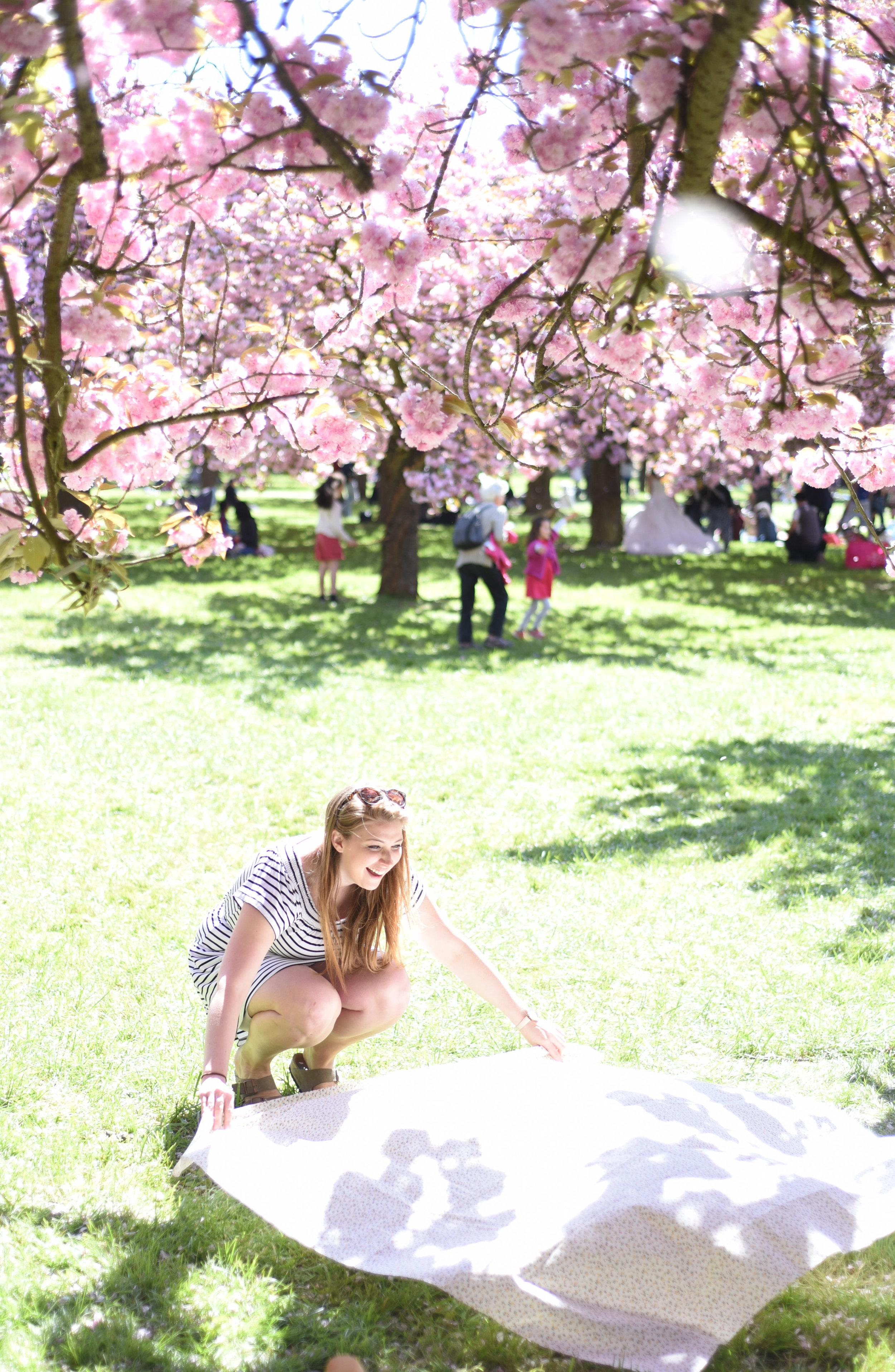 cherry blossoms paris-6.jpg