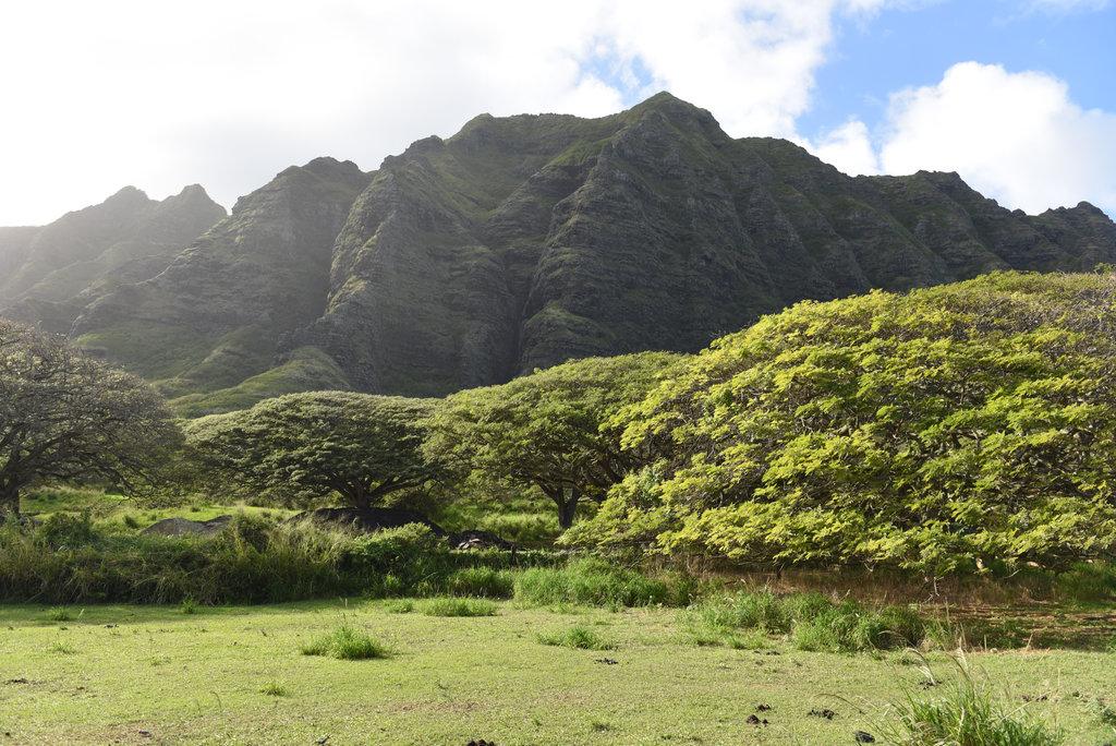 Hawaii2018-817.jpg