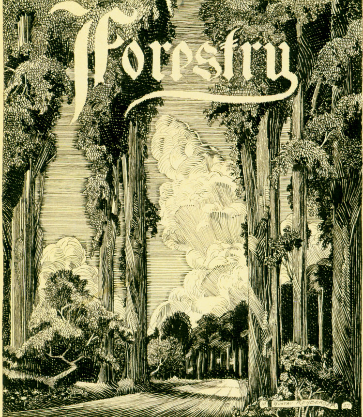 1927 - Forestry Closeup (Pen & Ink 6 x 5.25)